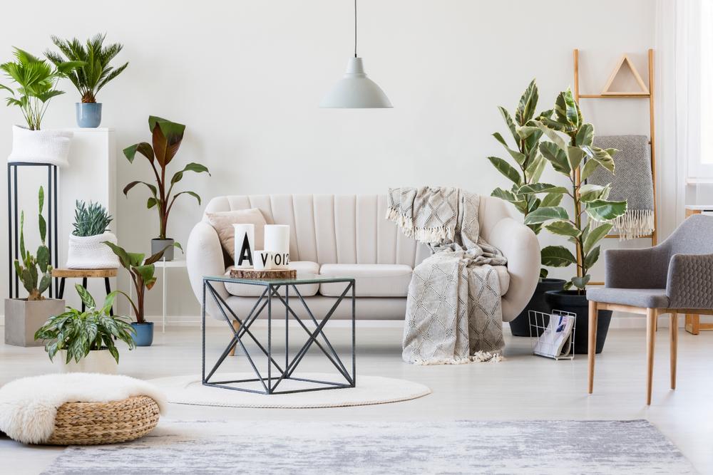 plantas decorativas resistentes para un departamento