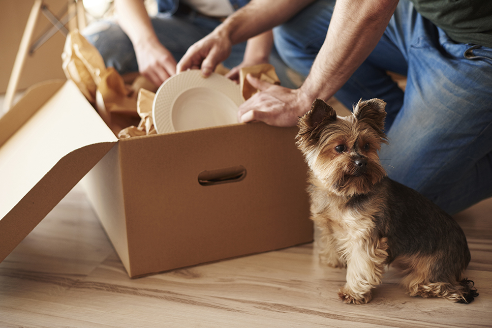 Departamentos para mascotas